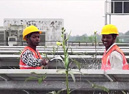 между солнечными панелями успешно выращивают тонны овощей
