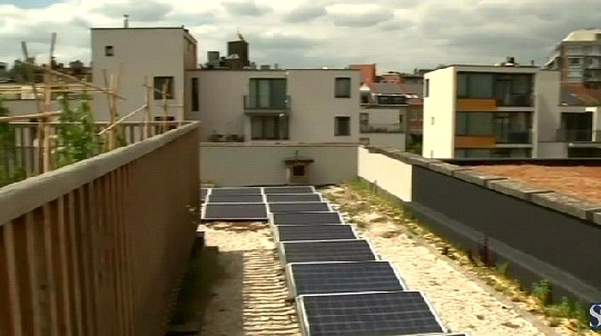 Энергией теплицы будут обеспечивать солнечные фотоэлементы